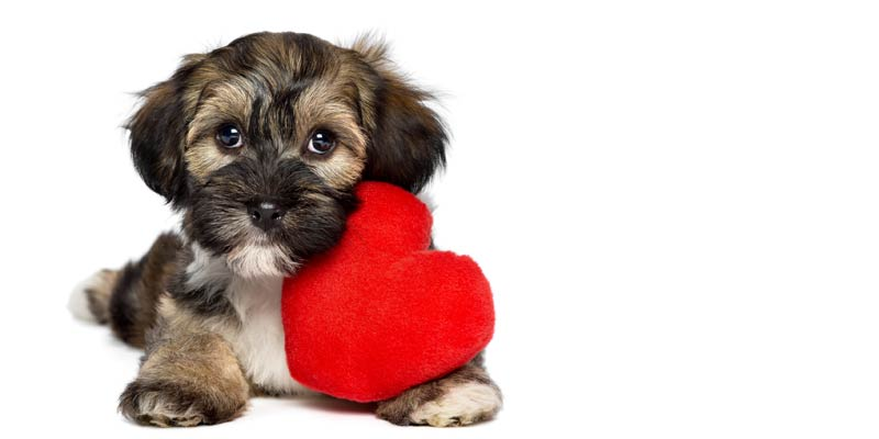 gifts for dog lovers | gifts for pet lovers | gifts for animal lovers | christmas gifts for dog lovers | valentine gifts for dog lovers | unusual gifts for dog lovers | dog gifts for dog lovers | unique gifts for dog lovers | jewelry gifts for dog lovers | best gifts for dog lovers | christmas gift for dog lover | christmas gifts for dog lover | gifts for dog lover | the perfect gift for dog lovers.